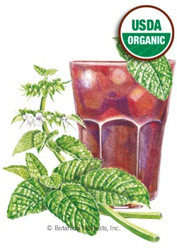 Lemon Balm Organic HEIRLOOM Seeds