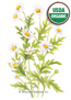 Feverfew Organic HEIRLOOM Seeds