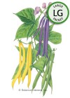 Bean Bush Trio Seeds (LG)